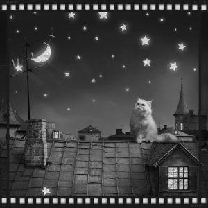 cat moon